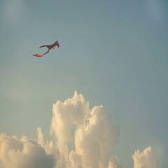 Rainbow Color Kite Flying With The Blue Sky And A Fluffy Cloud On The Background Stock Footage