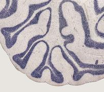 Microscopic brain detail Stock Photos