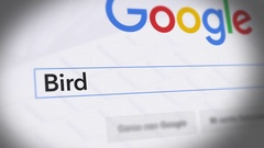 Google Search Engine - Search For Bird Stock Footage