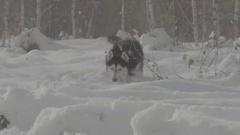 Husky dog hunts in snow Stock Footage