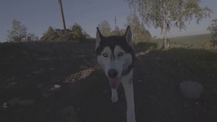 Dog is going to flycam Stock Footage