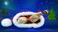 2017 Celebration winter night background, two golden small roosters Stock Footage