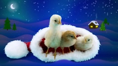 2017 winter night with three small yellow roosters relaxing in Santa Claus hat Stock Footage