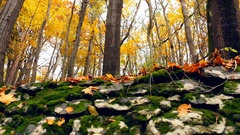 Rocks Wall In The Autumn Forest Stock Footage