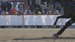 Racing horses fast trot in front of people on a stadium - side view Stock Footage