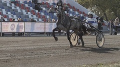 Grey harness horse with a jockey trots to the finish (slow motion) Stock Footage