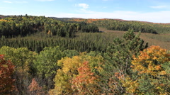4K UltraHD Timelapse of Algonquin's boreal forest Stock Footage