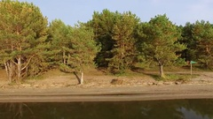 Pines on the beach Stock Footage