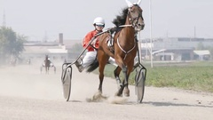 Harness horse - brown racing horse with a jockey on a track (slow motion) Stock Footage