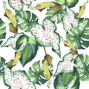 Tropical Hawaii leaves palm tree pattern in a watercolor style isolated. Piirros