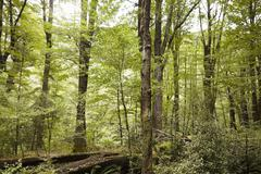 Woodland Near Queenstown In New Zealand's South Island Stock Photos