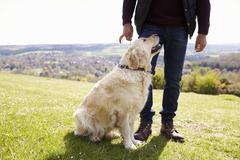 Close Up Of Golden Retriever On Walk In Countryside Stock Photos