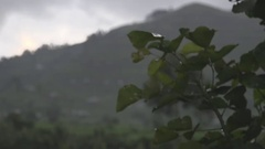 Plant in the African jungle in the rain with mountains in the background. Stock Footage