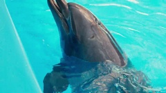 Dolphins perform at the Dolphinarium Stock Footage