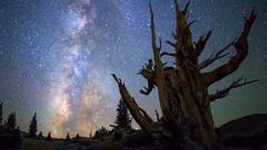Astro Timelapse of Milky Way thru Ancient Bristlecone Pine Tree -Tilt Up- Stock Footage