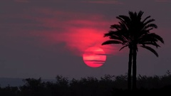 Red sun goes down at sunset behind the palm trees silhouettes Stock Footage