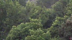 Heavy rain, strong wind shakes the branches of trees, ULTRA HD 4K, real time Stock Footage