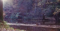 Tilting shot of bid tree in beautiful park scenery in autumn Stock Footage