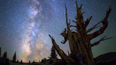 Astro Timelapse of Milky Way thru Ancient Bristlecone Pine Tree -Pan Left- Stock Footage