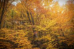 Autumn forest in the rays of the setting sun. Stock Photos