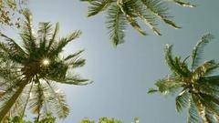 Sun shining through coconut palm leaves, 4k Stock Footage