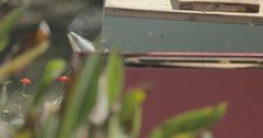 Bee Smoker Beside Beehive with Honeybees Flying Stock Footage