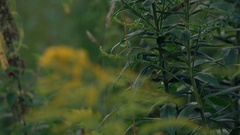 Green plant close-up, slow motion Stock Footage
