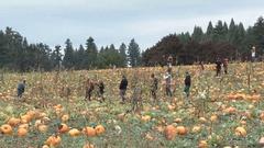 Oregon Pumpkin Patch People Stock Footage