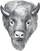 American Bison Head Watercolor Piirros