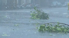 Trees blowing in surge of typhoon Wind and Rain Stock Footage