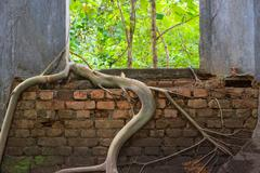 Window with roots of trees grip inwards Stock Photos