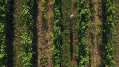 Aerial - Flyover woman with a sun hat running in the vineyard, top down view Stock Footage