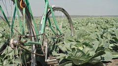 Old Bicycle on Cabbage Field Stock Footage
