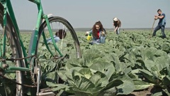 Young Farmers Working on Field Stock Footage