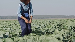 Curly African Farmer Inspecting Cabbages Stock Footage