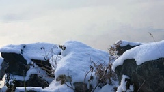 Stones covered by snow  on calm water background in early winter Stock Footage