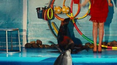 Seal performs at the Dolphinarium, night show Stock Footage