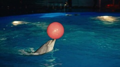 A colorful show in the Dolphinarium, dolphins perform for Stock Footage