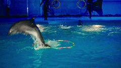 Night show at the Dolphinarium dolphins perform Stock Footage