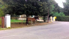 Horse Grazing Near The Road Stock Footage