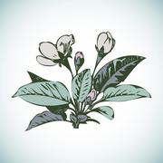 Cherry branches with flowers, sakura vector illustration Stock Illustration