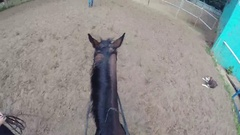 Man on horse in Stable of horse squadron of police to patrol of park Stock Footage