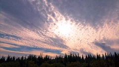 Clouds and green cypresses at sunset, time lapse Stock Footage