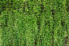 Green plant botany background Stock Photos