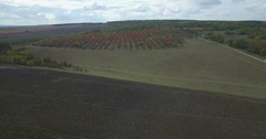 Camera flies over an autumn orchard west Ukraine Stock Footage