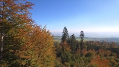4K Amazing nature - beautiful cinematic aerial shot of a forest in autumn Stock Footage