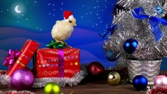 Beautiful young rooster (symbol of 2017) standing on the present box Stock Footage