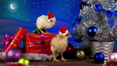 Two funny small roosters in Christmas decoration, 2017 New Year concept Stock Footage