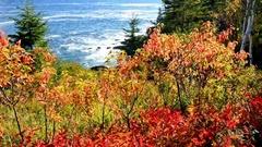 Acadia National Park foliage, Maine Stock Footage