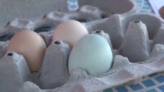 Free Range Chicken Eggs That are Blue and Brown Stock Footage